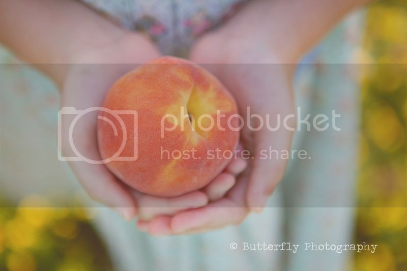 Copyright &#169; Butterfly Photography By Kimberly Chorney
